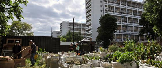 Urban garden next to large housing estate